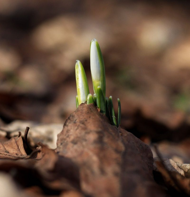 Spring Equinox Ritual for Growth